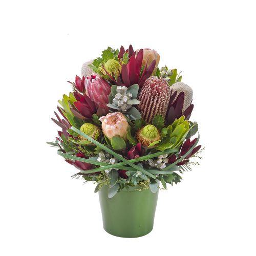 Bush Blooms - 816