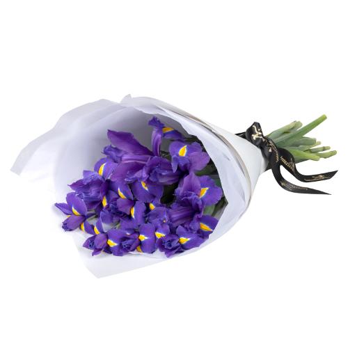 Iris - smb008